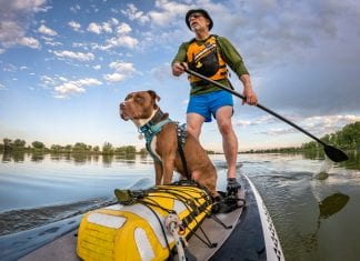 7 Best Sit On Top Kayaks for Dogs